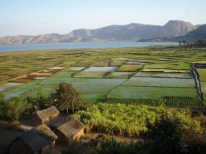 Tongasoa Madagascar. Rizière à Madagascar