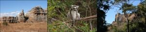 """Les richesses du parc de l'Isalo, la """"Reine de l'Isalo"""", les lémuriens Maki Catta et les paysages de grès, sont une visite incontournable."""