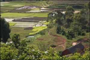 es rizières sur les hauts plateaux à différents stades de culture du riz.