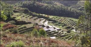 Héritage des indonésiens,  premiers colons de Madagascar installés sur les hautes terres, les rizières en terrasses sont très présentes.