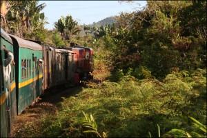 Le mythique train FCE continue son périple dans la forêt.