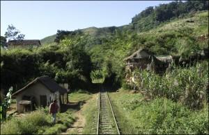 Les rails du FCE s'enfoncent dans la forêt d'emeraude.