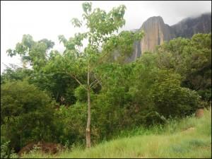 L'imposant Tsaranoro vu du Camp Catta.