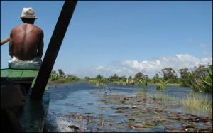 Navigation sur le canal parmi les nénuphars et oreilles d'éléphant.