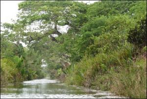 Par endroit, certains bras du canal sont très étroits, mais c'est un enchantement d'y naviguer.
