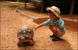 La tortue Radiata fait le bonheur de Titouan.