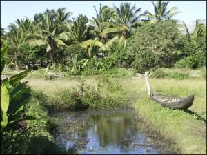 Des endroits calmes et reposants avec une végétation luxuriante.