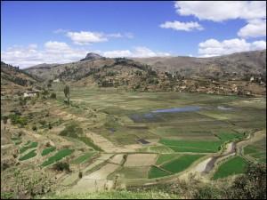 Paysage de cultures très typique des alentours d'Antsirabe.