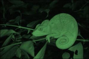 La nuit permet d'observer bon nombre de petits animaux.