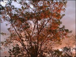 La plupart des arbres portent des feuilles caduques et beaucoup fleurissent de septembre en novembre.
