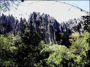 Les forêts qui se sont formées dans les gorges sont les plus riches en diversité d'espèces.