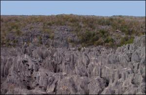 Plusieurs types de formations végétales se distinguent au cœur du parc.