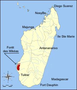 Le territoire de Mikéas est situé dans une forêt au sud-ouest de Madagascar.