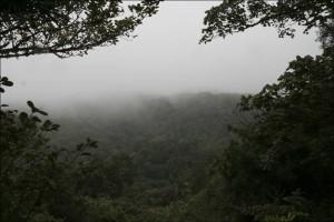 La forêt du parc national de la Montagne d'Ambre est une des plus arrosée de la Grande île.