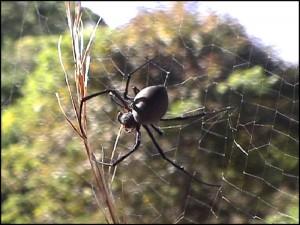 Une araignée dans la forêt de la Montagne d'Ambre.