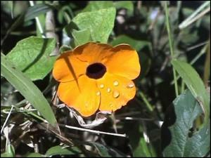 Une fleur de la Montagne d'Ambre.
