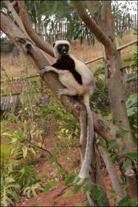 Tout a été pensé pour pouvoir préserver la tranquillité des animaux et rendre la visite riche en découvertes
