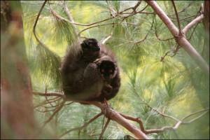 La visite se fait sans fatigue et sans risque tout en permettant d'approcher une faune unique.