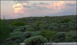 La belle forêt des Mikéa est elle appelée à disparaître  dans un avenir proche ?
