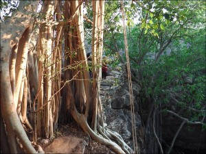 Arbres dans la forêt en bordure du lac Tsimanampetsotsa