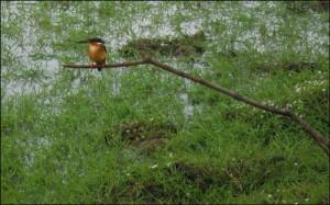 Le lac Kinkony, au sein de la zone protégée, est un des plus important sanctuaire d'oiseaux de Madagascar.