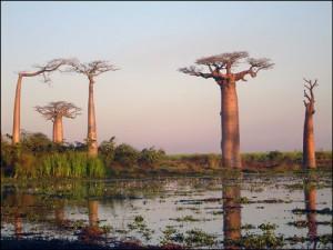 Paysage de la ragion du Menabe. Madagascar.