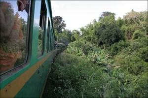 Le train FCE qui relie Fianarantsoa à Manakara sur 169 km à travers la forêt avant de rejoindre l'Ocean Indien.