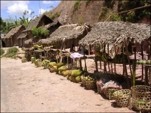 le littoral de l'Ocean Indien est riche en fruits divers.