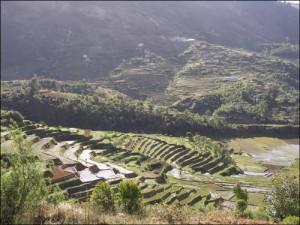 Superbes rizières en terrasses sur les Hauts Plateaux au bord de la RN7.