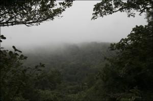 Le parc de la Montagne d'Ambre . Forêts sempervirentes.