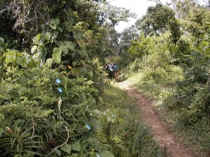Forêts sempervirentes. Parc national du Masoala.