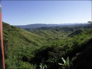 La forêt d'Emeraude. Madagascar forêts.  Flore malgache.