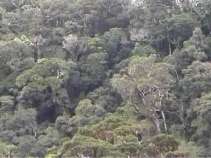 Madagascar. Forêts. Parc de la Montagne d'Ambre. Flore malgache.