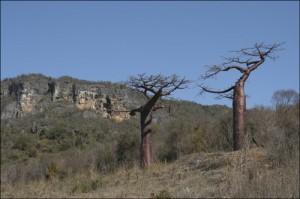 Forêts sempervirentes. Montagne des Français.
