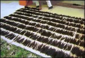 La vanille de Madagascar est séchée quelques heures par jour, d'abord sur des claies au soleil puis à l'ombre pour une meilleure qualité.