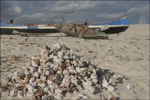 Sur la plage de Salary, des tas de coquillages vides, de-ci de-là ....