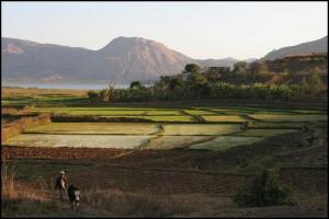 Voyage accessible. Les paysages sont toujours différente et magnifiques à Madagascar. Les rizières sont omniprésentes sur l'île.