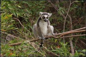Voyage accessible. Les lémuriens sont endémiques de Madagascar, à eux seuls ils méritent le voyages.