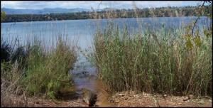 Le lac sacré d'Antanavo et ses crocodiles.  Ankarana.
