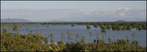 Mangrove à Nosy-Be