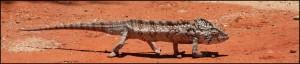 Caméleon rencontré lors d'un circuit à Madagascar.