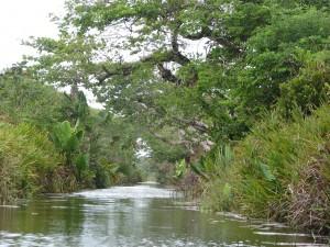 Zafimaniry Pangalanes. Canal des Pangalanes.